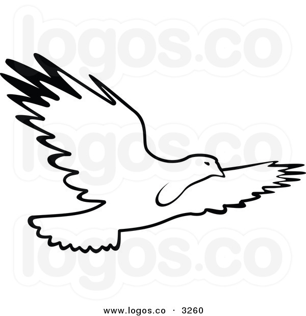 600x620 Sea Bird Clipart Black And White