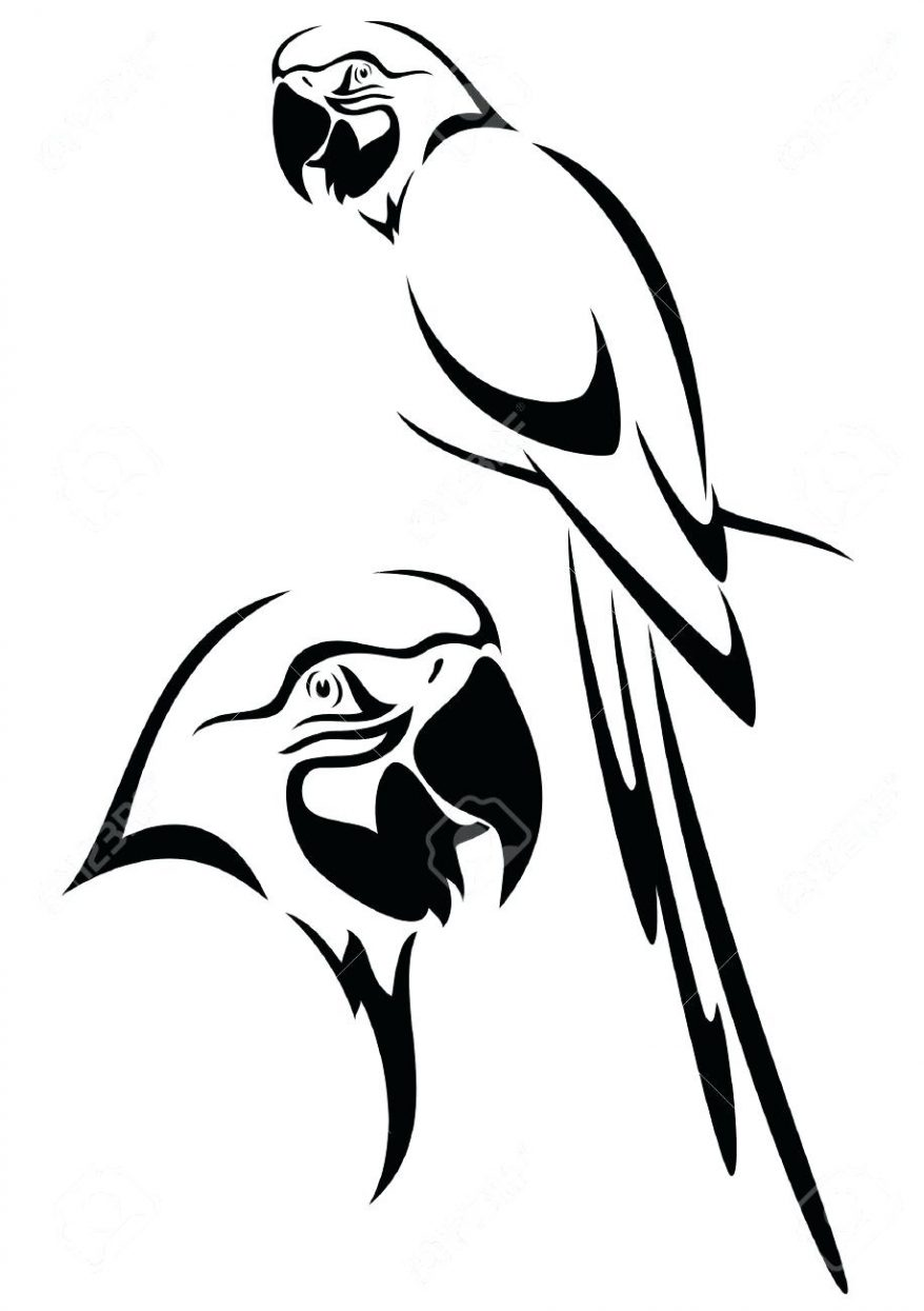 878x1245 Tropical Parrot And Bird Head Black White Vector Outline Stock 46