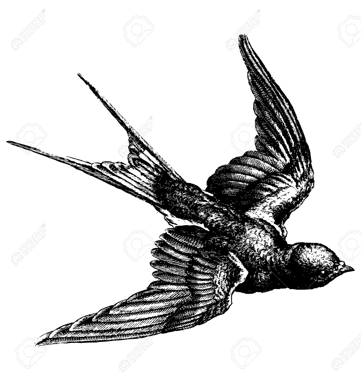 1235x1300 Drawing Of A Flying Bird