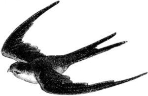 300x196 Flying Bird Drawing