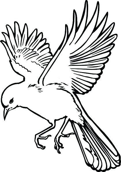 420x596 Bird Drawing Outline