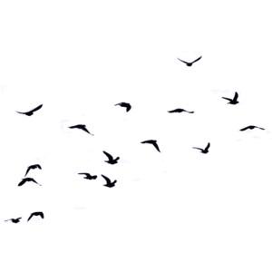 300x300 Flock Of Birds Png Transparent Flock Of Birds.png Images. Pluspng