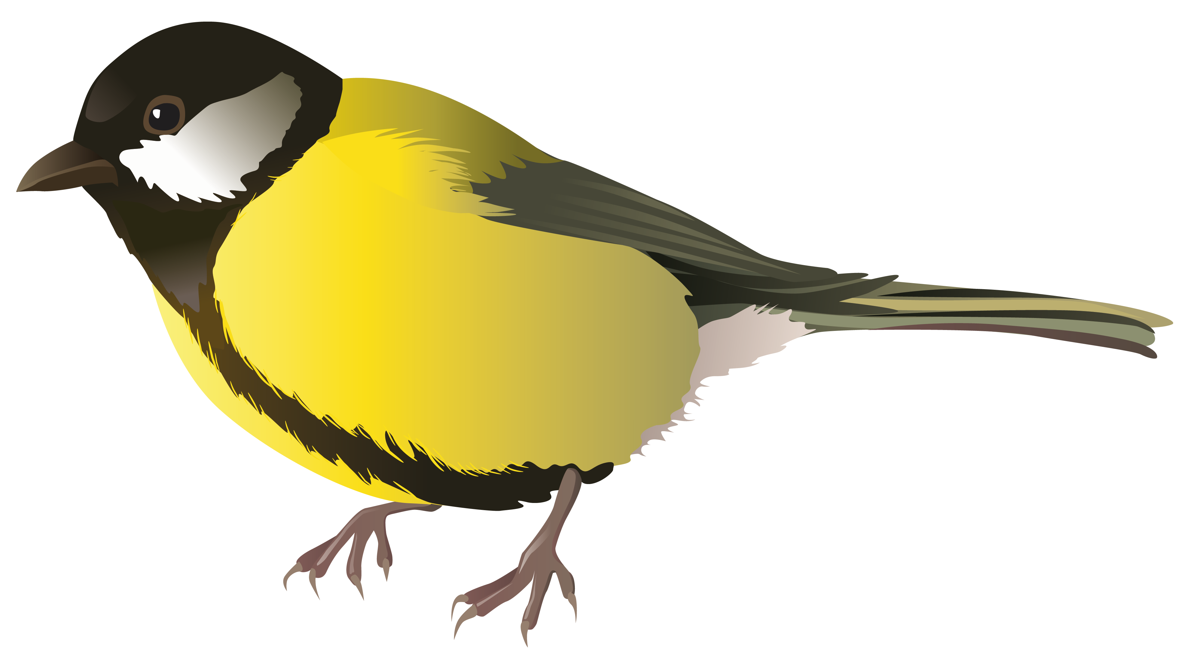 3970x2178 Birds Png Images Free Download, Birds Png