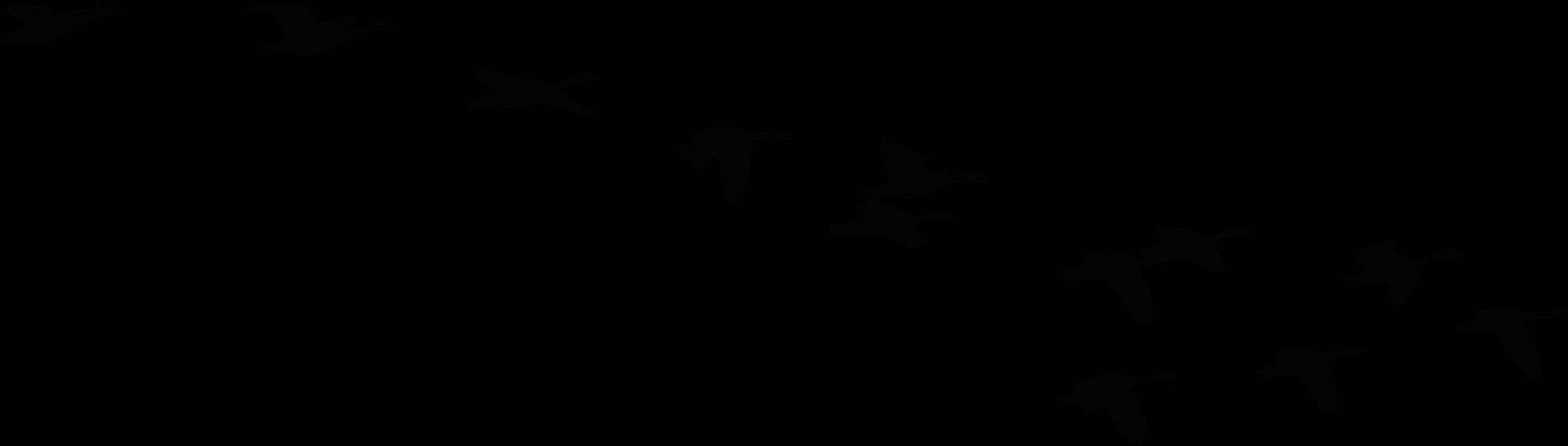 2312x658 Flock Of Birds Clipart Goose