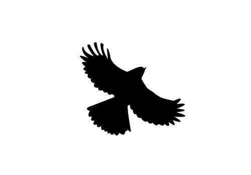 500x350 Free Flying Bird Silhouette Vector Sv Stock Blog Silhouette Clip
