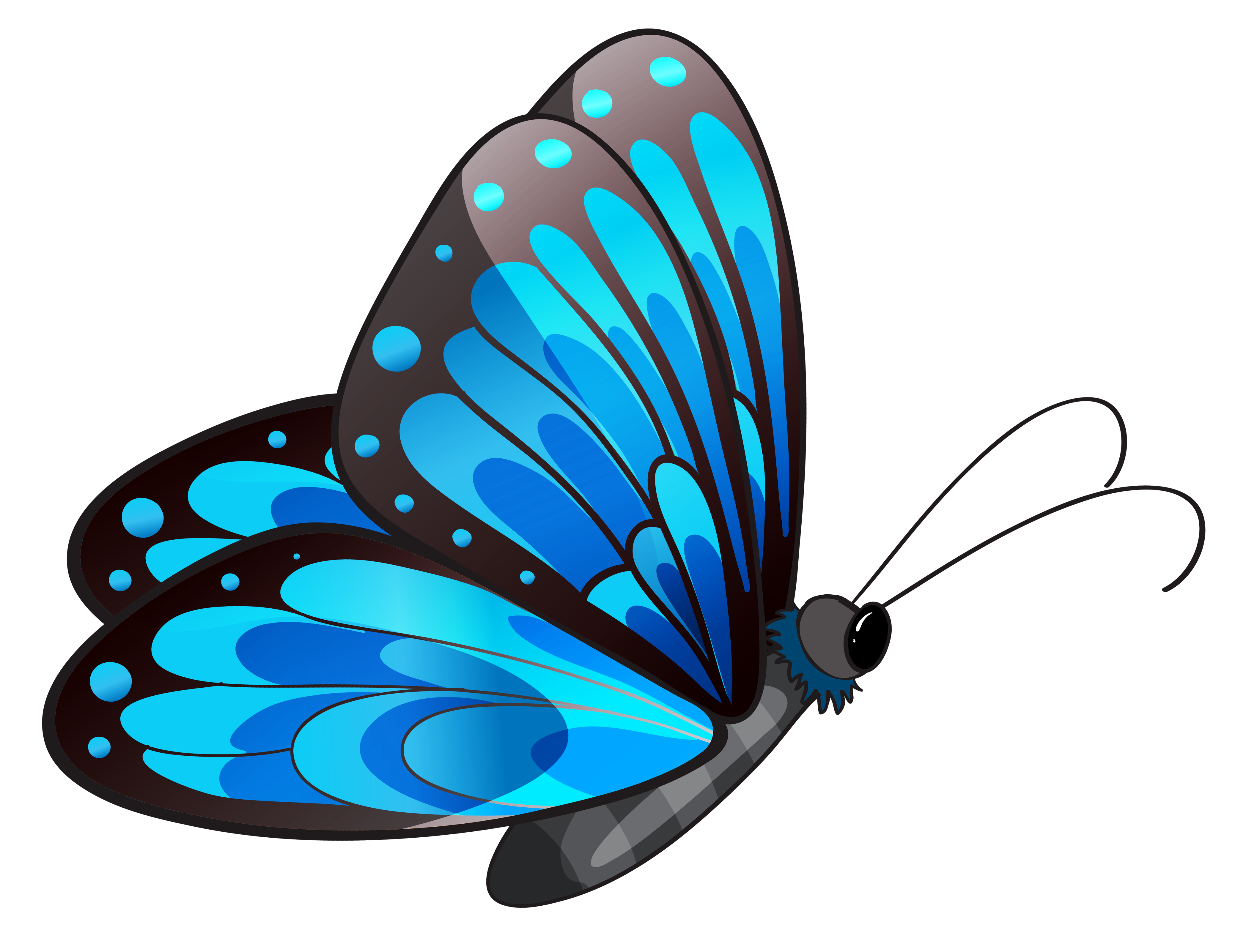 Flying Butterfly Clipart | Free download best Flying ...