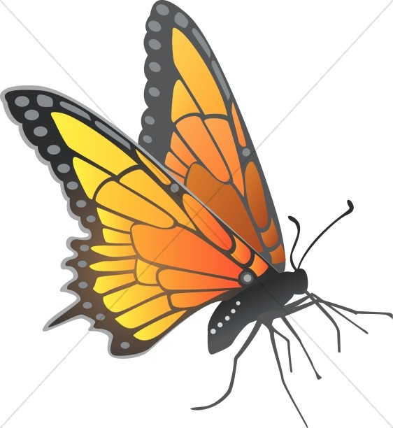 562x612 Monarch Butterfly Clipart Line Art