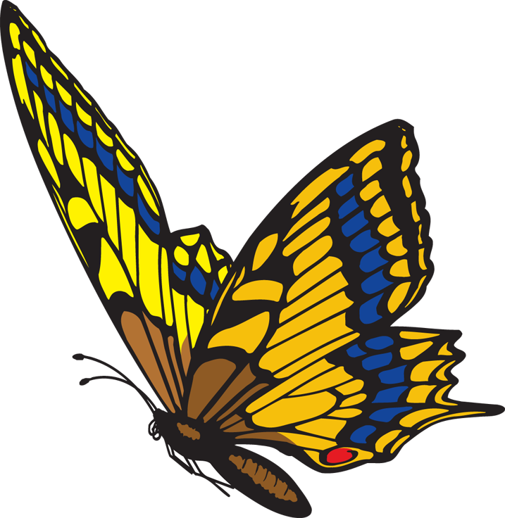 717x736 Monarch Butterfly Clipart Moving Image