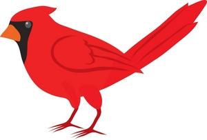 300x203 Realistic Clipart Cardinal Bird
