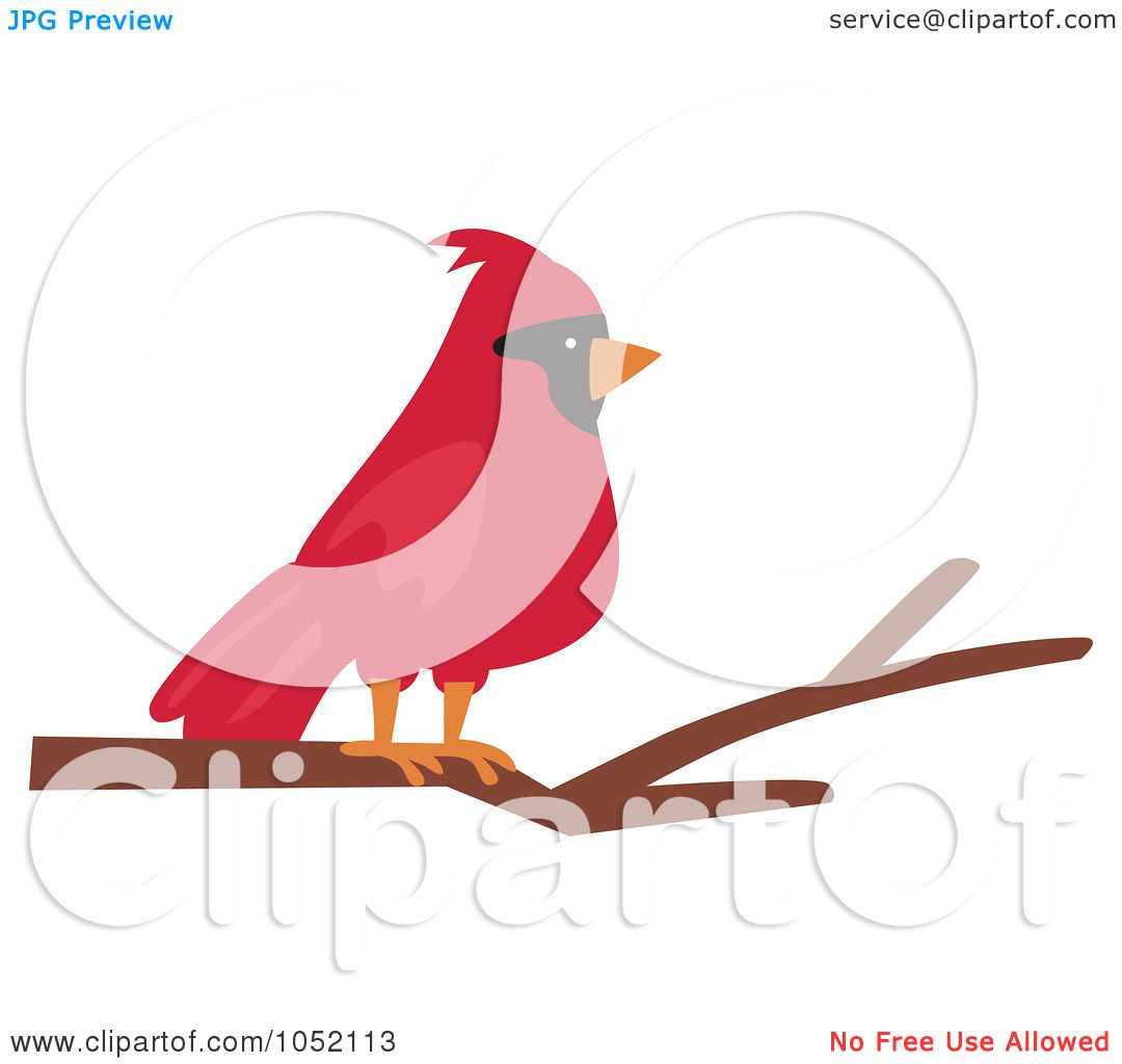 1080x1024 Royalty Free Vector Cliprt Illustration Of Red Cardinal On