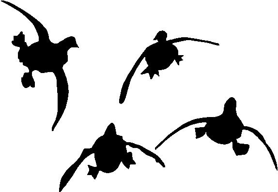 574x397 Graphics For Flying Duck Clip Art Graphics