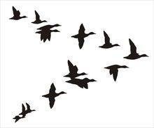 220x184 Duck Silhouette Clip Art Stock Photo Illustrated Silhouette