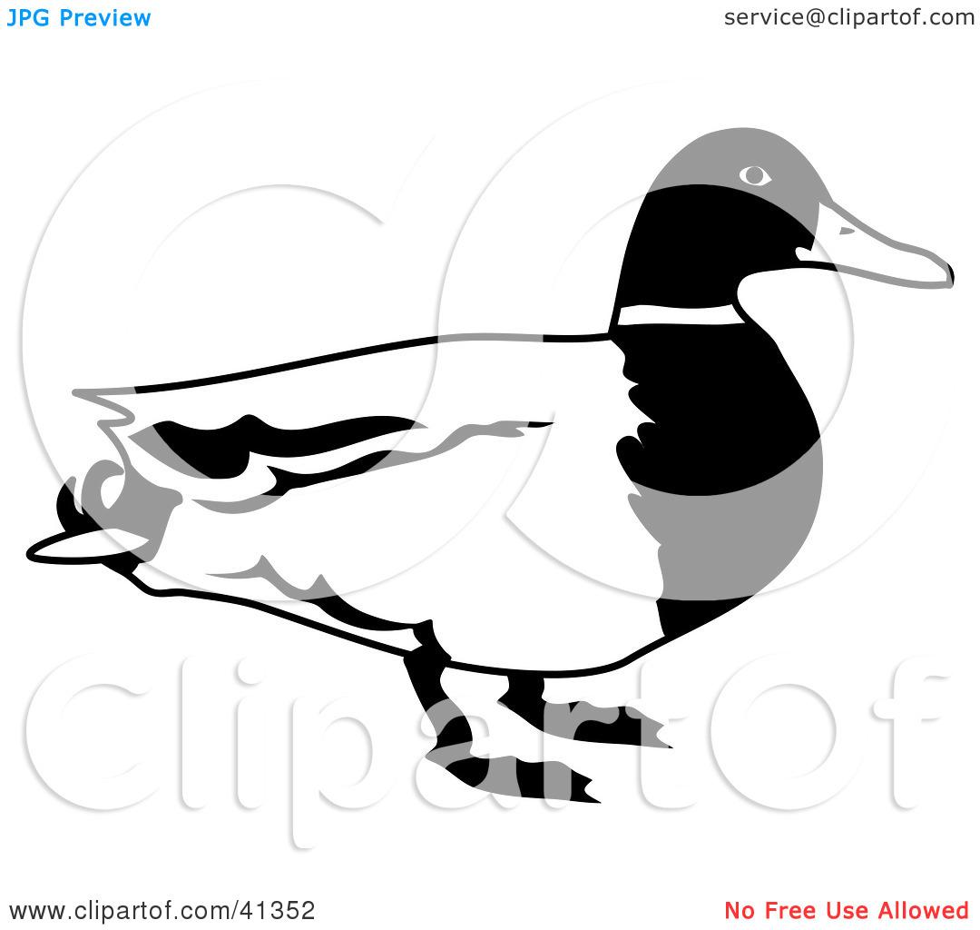 1080x1024 Mallard Duck Clipart Black And White