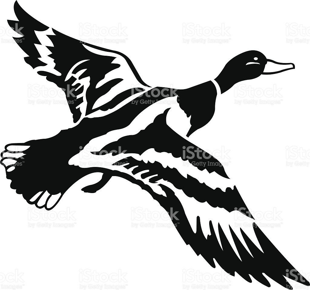 1024x957 Mallard Clipart Black And White