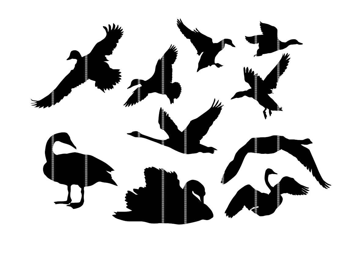 image regarding Bird Silhouette Printable referred to as Traveling Duck Silhouette Free of charge down load excellent Traveling Duck