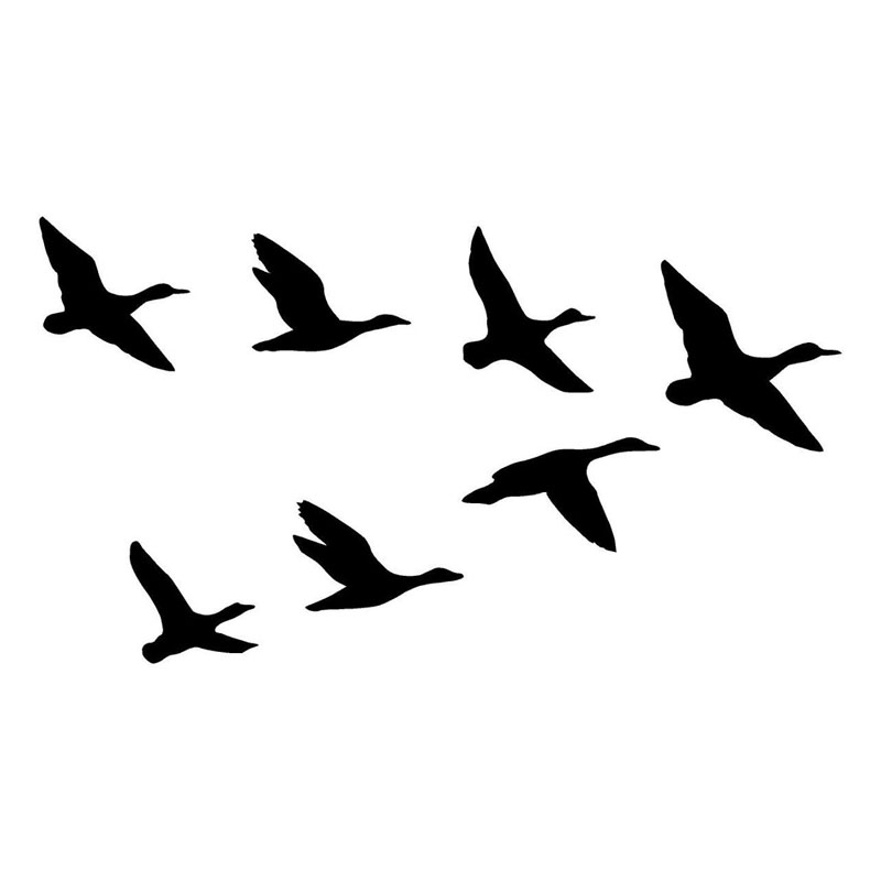 800x800 Graphics For Graphics Groups Ducks Flying