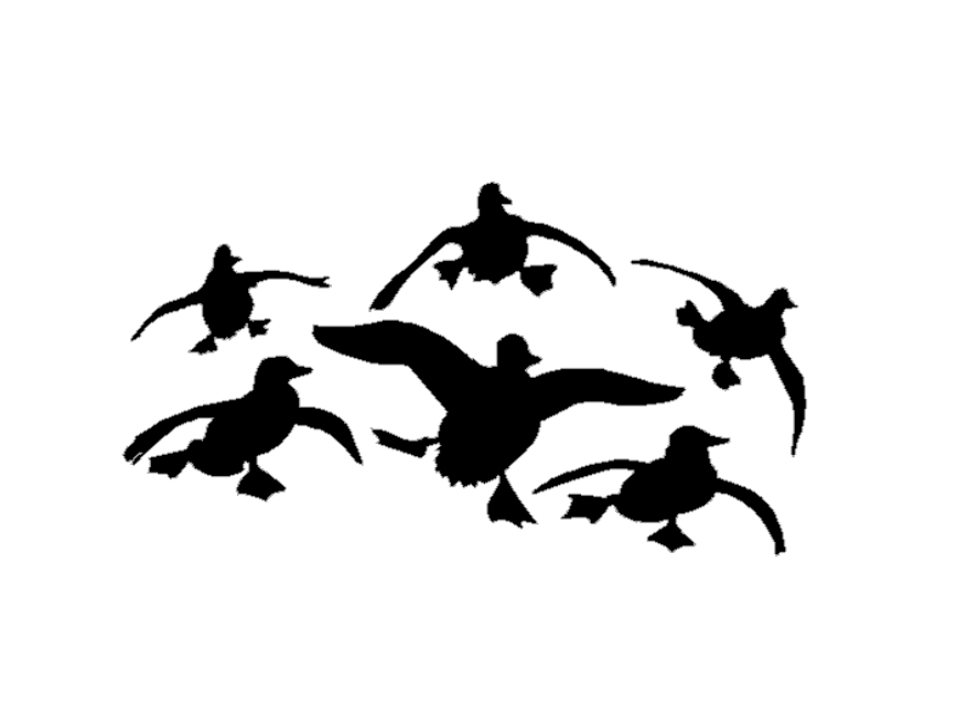878x659 Flying Ducks Decal