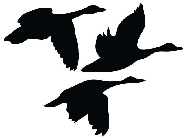 640x480 Flying Geese Northbound Elements