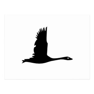 324x324 Flying Goose Postcards Zazzle