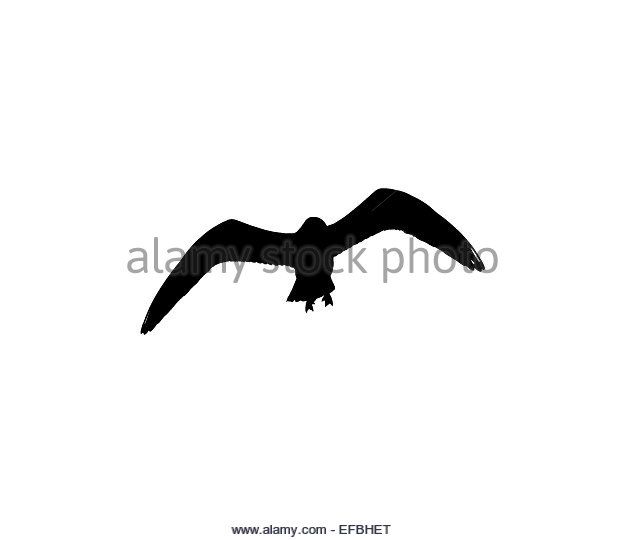 624x540 Bird Silhouette Cut Out Stock Images Amp Pictures