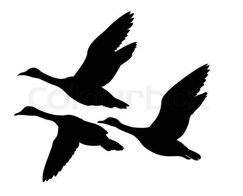 800x645 Vector Silhouette Flying Ducks On White Background Stock Vector