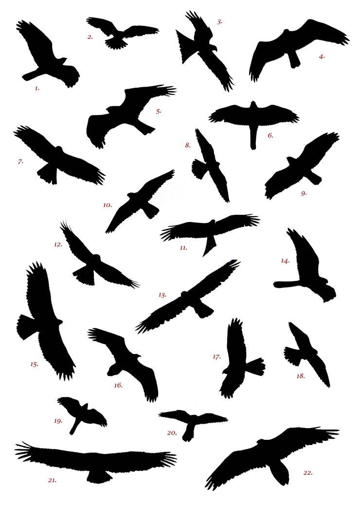 736x1041 Bird Of Prey Clipart Flight Silhouette Clip Art