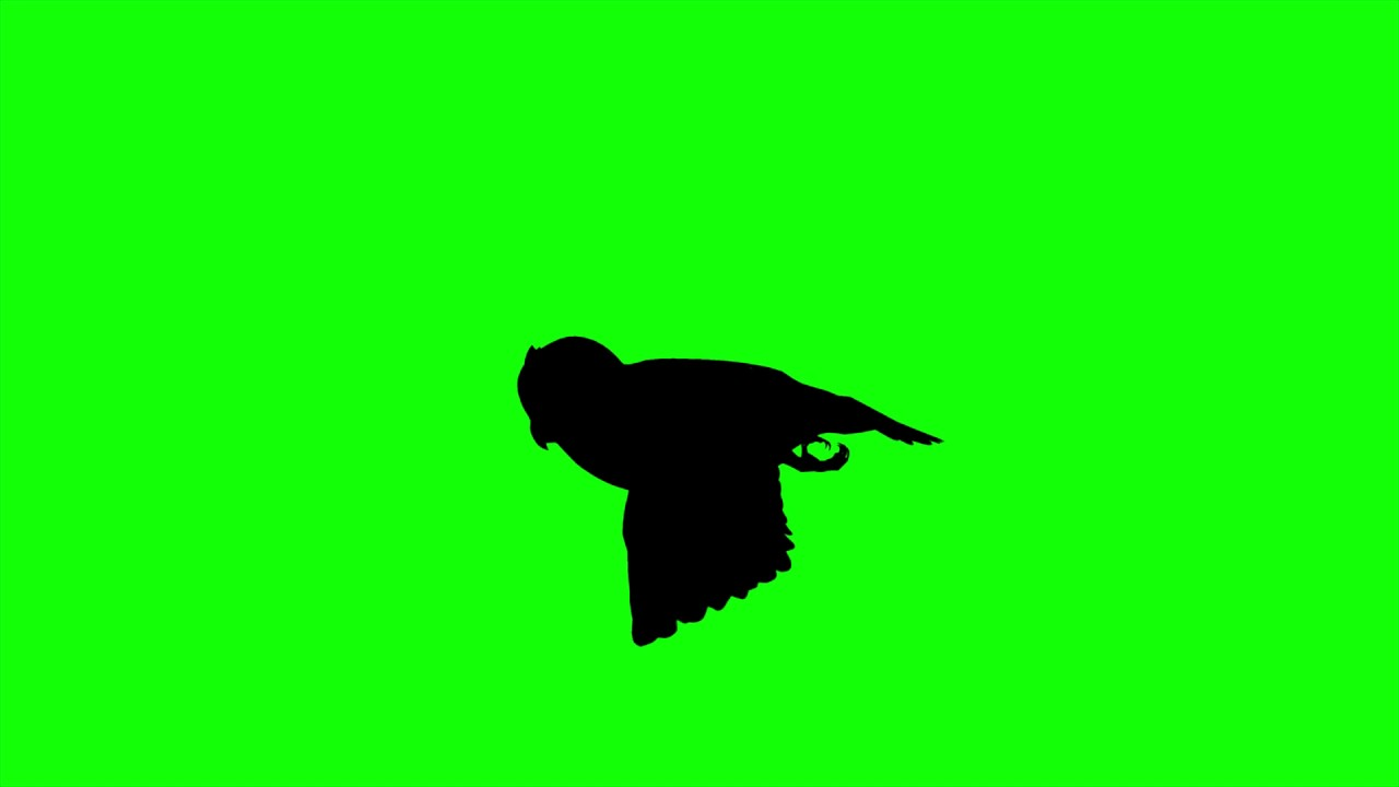 1280x720 Free Hd Video Backgrounds Silhouettes Owl Flying On Green