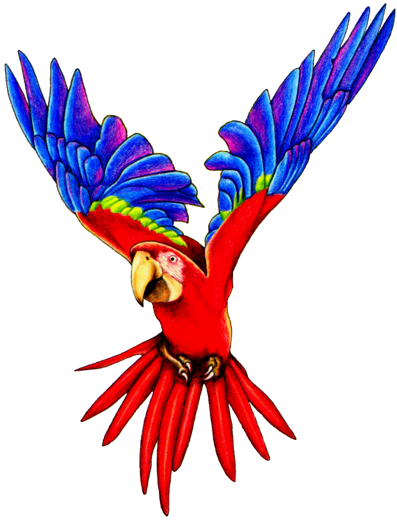 782x1024 Flying Parrot Clipart