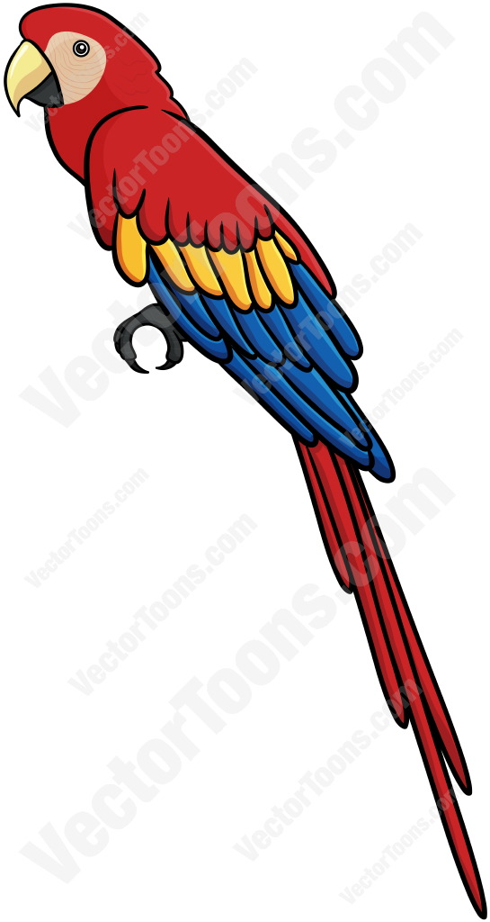 545x1024 Graphics For Parrot Clipart Graphics