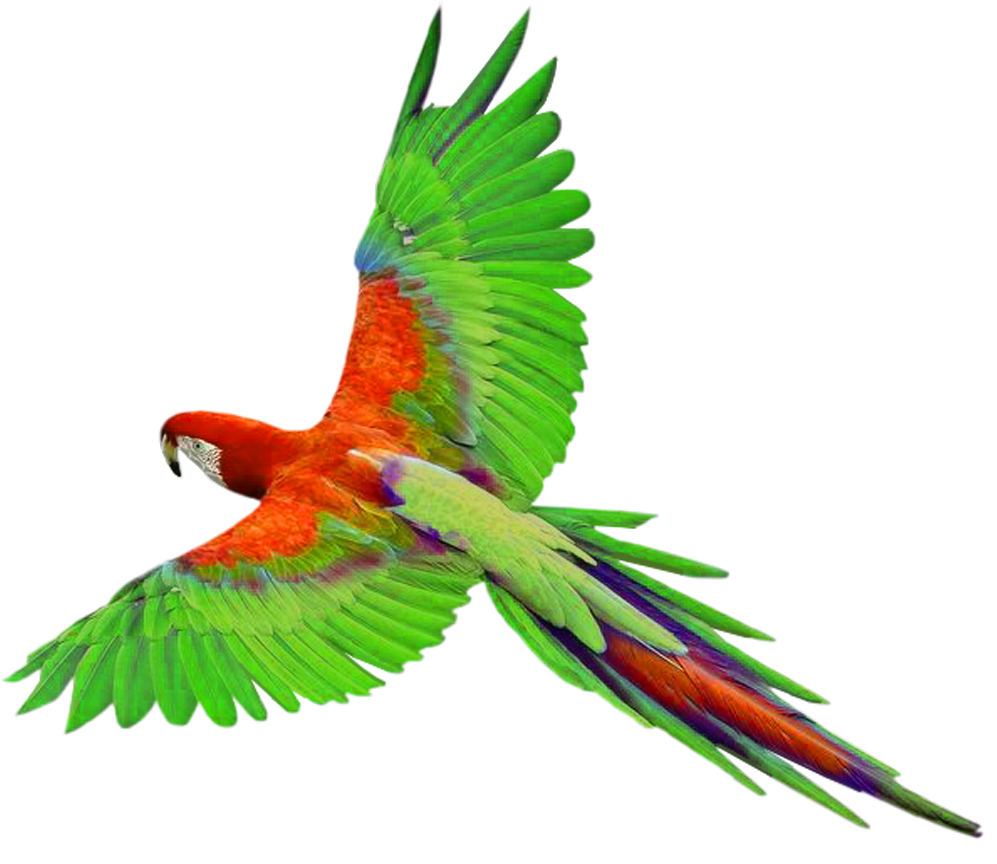 997x864 Parrot In Flight Png Clipartu200b Gallery Yopriceville