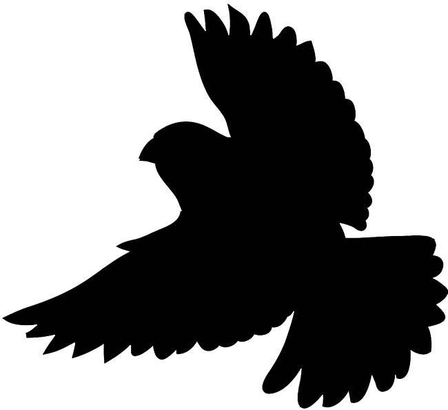 650x594 Shadow Of A Bird Clipart