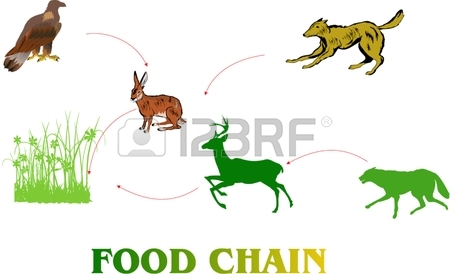 Food Chain Clipart