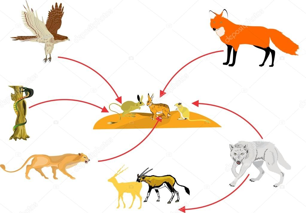 1023x712 Food Chain In Desert Stock Vector Baurz