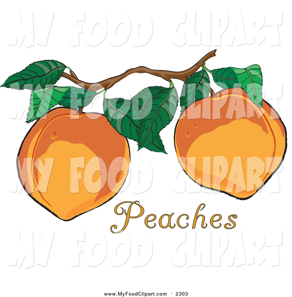 1024x1044 Food Clip Art Of Freshd Organic Peaches Growing On A Tree In