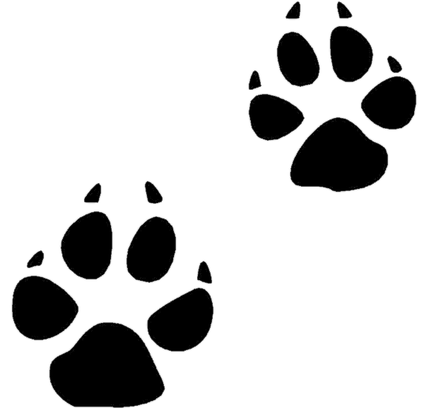600x577 Footprint Clipart Coyote