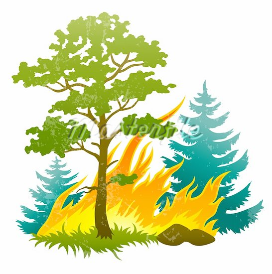 546x550 Fire Clipart Forest