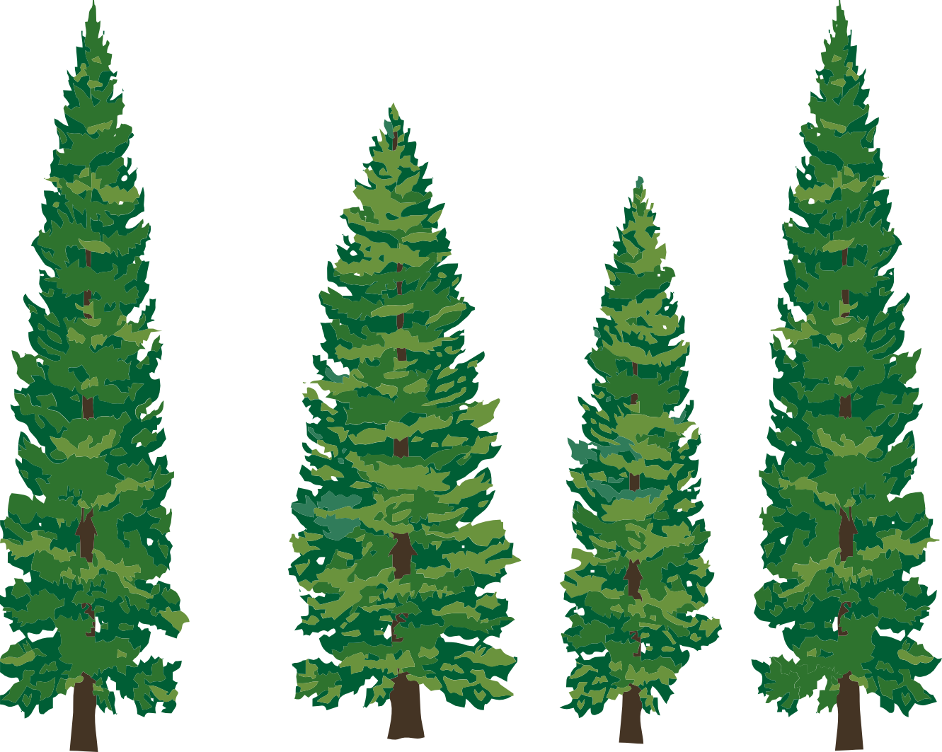 1331x1063 Forest Pine Tree Clipart