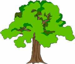 240x204 Park Clipart Forest Tree