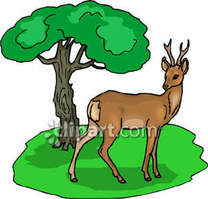 300x286 Top 82 Forest Clip Art