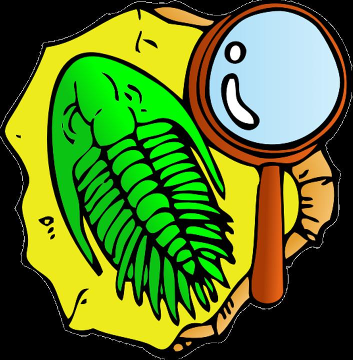 706x720 Fossil Clipart Adventurer
