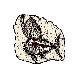 300x300 Shell Clipart Fish Fossil