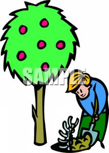 214x300 Boy Digging Up A Fossil Near An Apple Tree Clipart Image