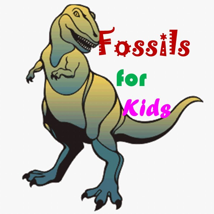 722x722 Fossils For Kids