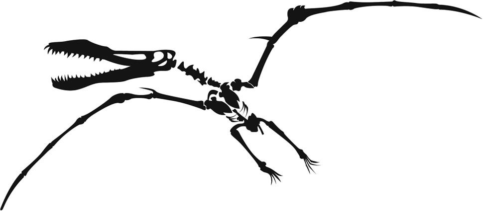 970x451 Free Dinosaur Bones Clipart Image