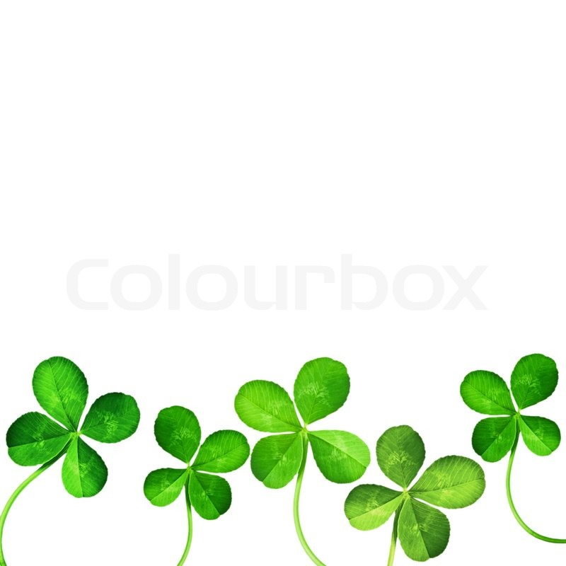 800x800 Four Leaf Clover Isolated On White Stock Photo Colourbox