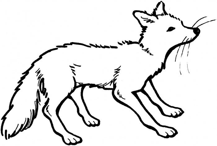 700x472 Polar Fox Clipart Black And White