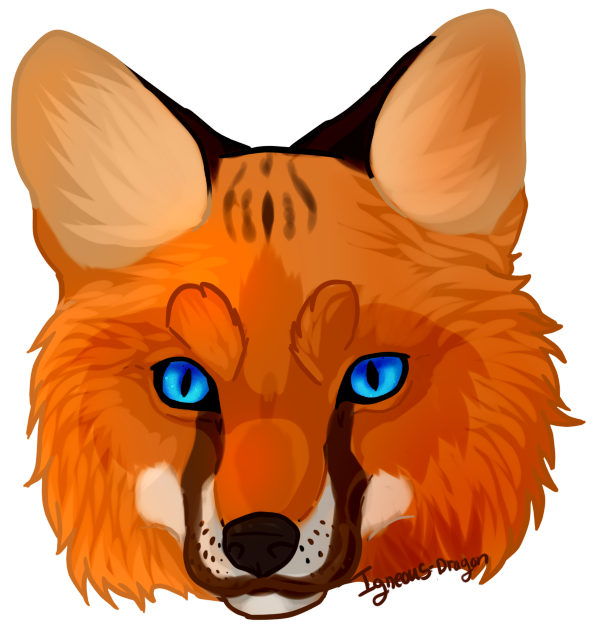 599x635 Fox Clipart Fox Face