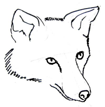 400x408 Fox Head Drawing 015