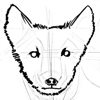 350x351 How To Draw An Arctic Fox