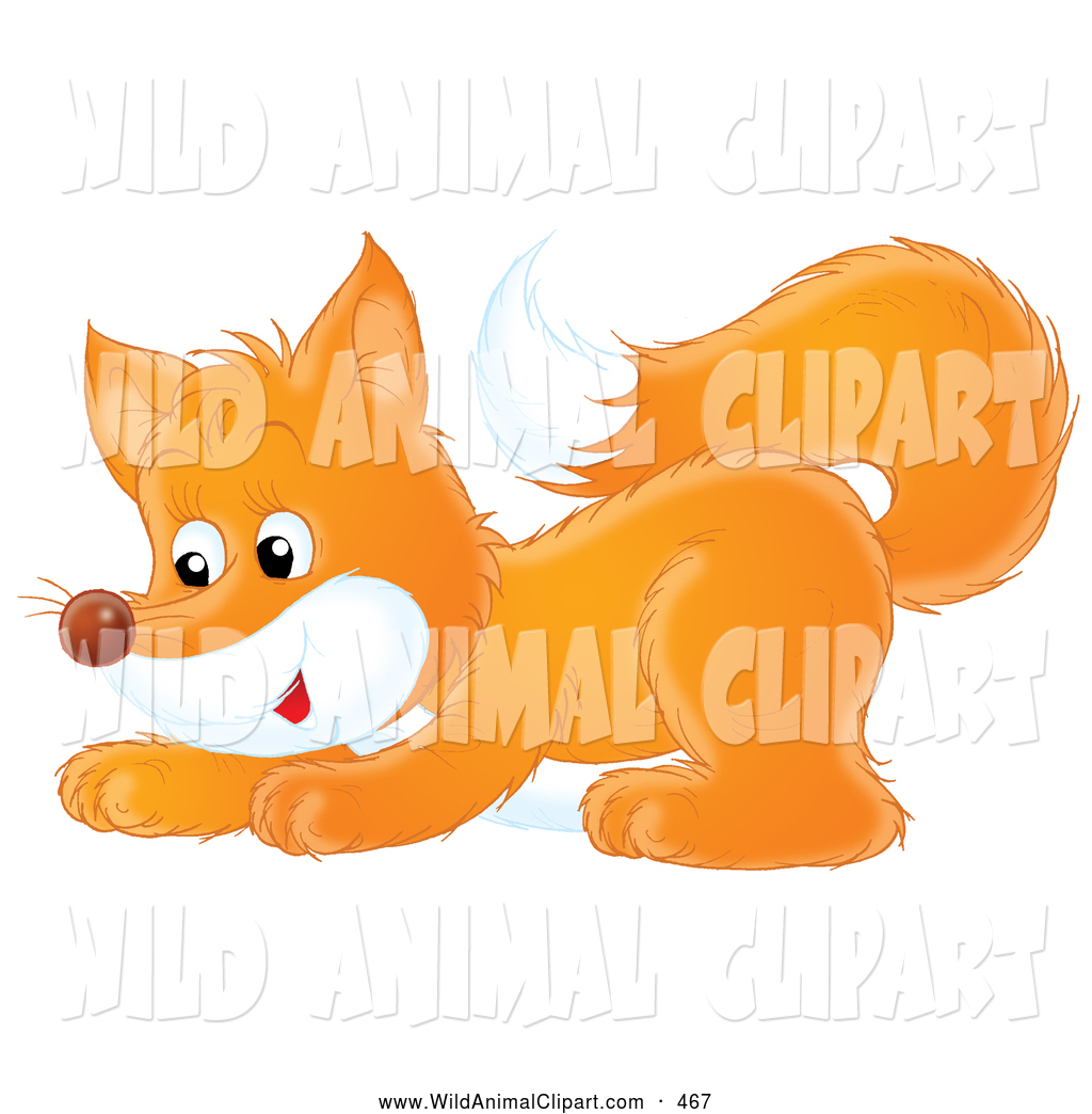 1024x1044 Royalty Free Stock Wildlife Designs Of Foxes